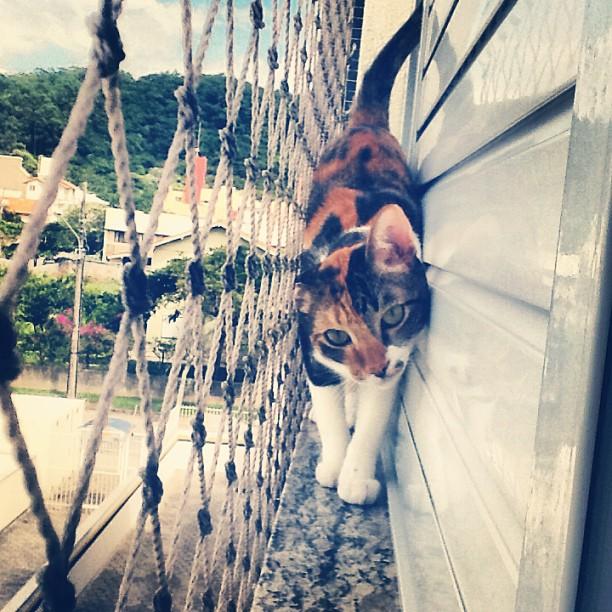 gato apartamento telado
