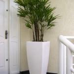 Palmeira Rafis - Nome científico: Rhapis excelsa. Com ciclo de vida perene, essa palmeira cresce melhor em ambientes com baixa ou média luminosidade. Procure manter a terra sempre úmida, reduzindo um pouco as regas nos meses mais frios para que a planta não sofra.